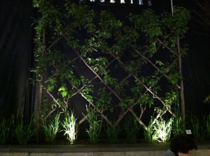 This screen looked like the branches were pleached (grown together). Wish it were better lighting.