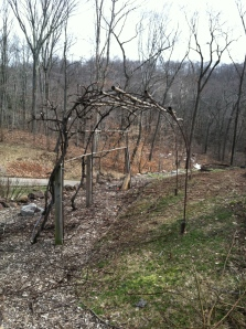 Grapevines will cover this rebar arbor by mid-summer. Hopefully, there will also be a decent crop of red grapes!